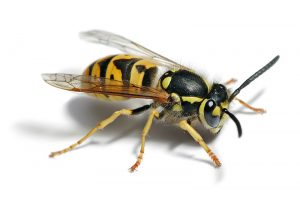 What Pests to Expect at a BBQ