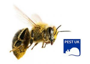 Bee Control by PestUK Pest Control Services