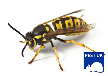 Removing a Wasp Nest in a Chimney | Pest UK