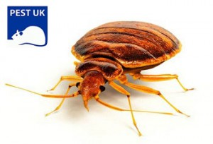 bed bugs in Oxford