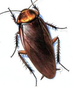 cockroach-jpg