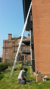 Prices for Removing Wasps or Bees in a Chimney | PESTUK Pest