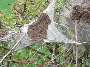 Pest Identification at PESTUK