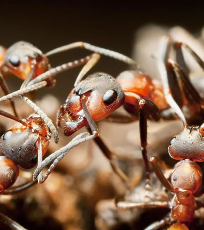 Get Rid Of Ant Problems | Ant Removal Specialists