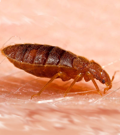 Get Rid Of Bed Bug Problems | Bed Bug Removal Specialists