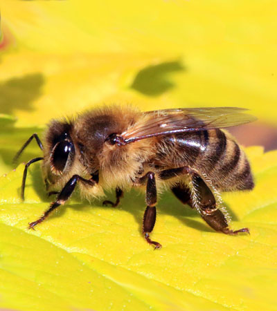 Get Rid Of Bee Problems | Bee Removal Specialists