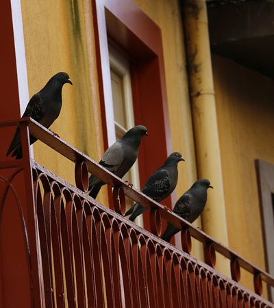 Pigeon & Bird Proofing