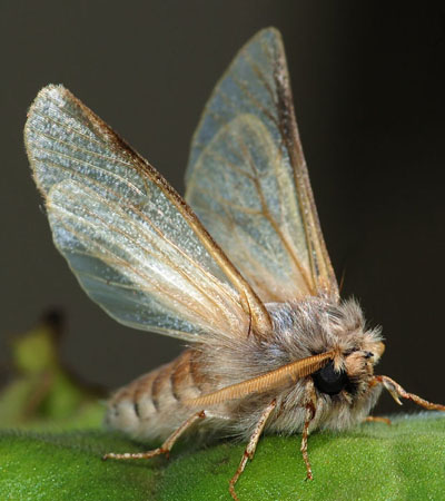 Moths / Beetles Problems?