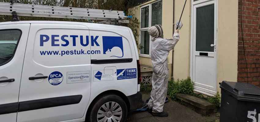 Pest Control in London: The Areas We Cover