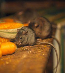 Pests that seek warmth in winter months