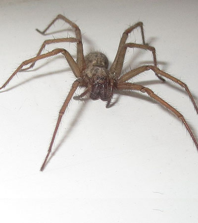 Get Rid Of Spider Problems | Spider Removal Specialists