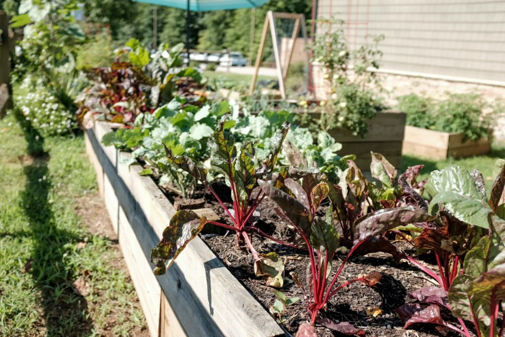 Pest Control for Gardens and Allotments