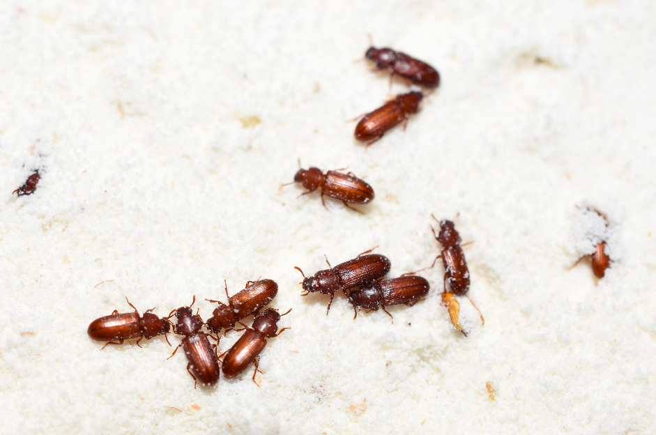 Are you attracting pests to your home without realising?
