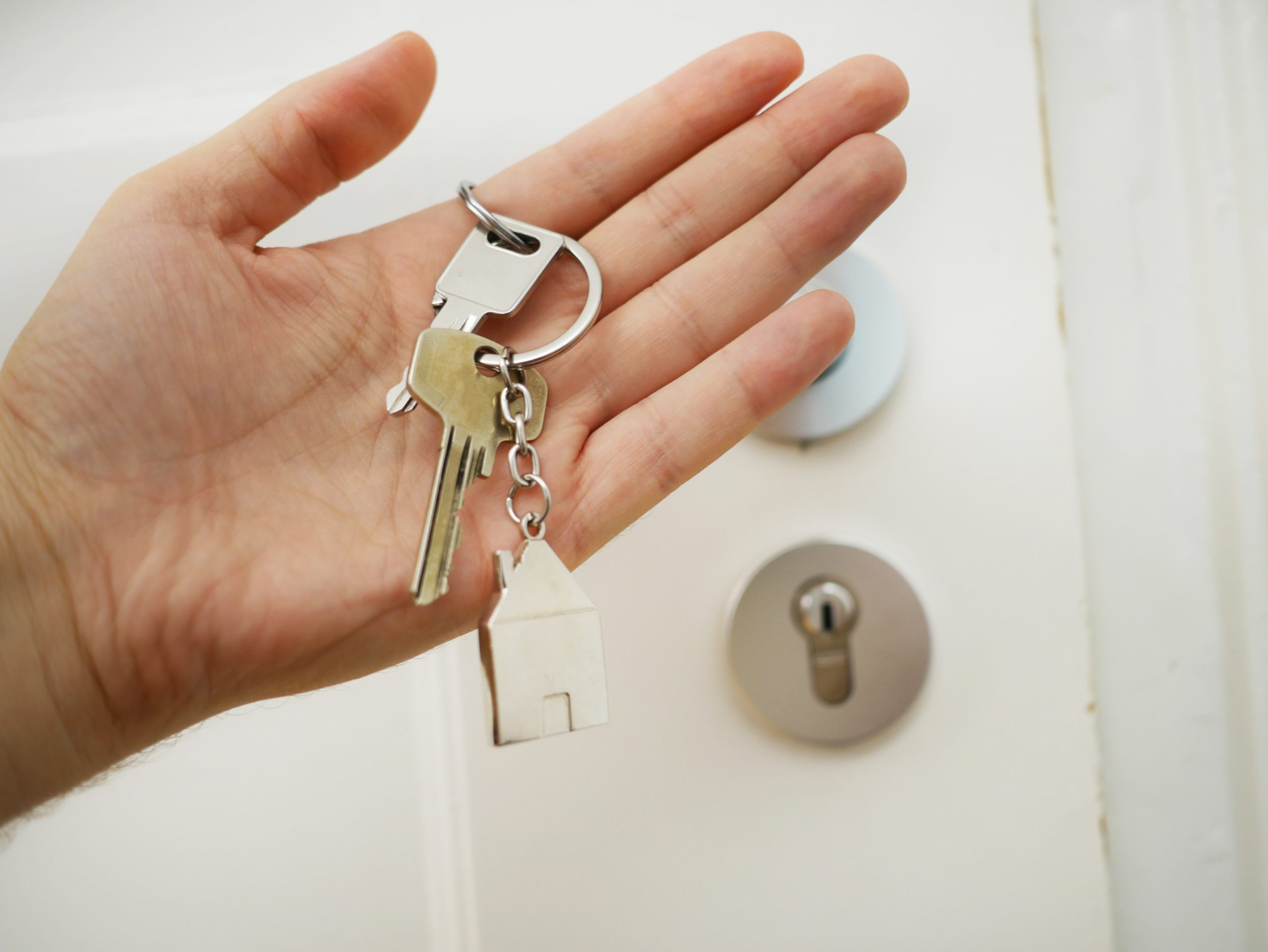 Pests to avoid when moving house