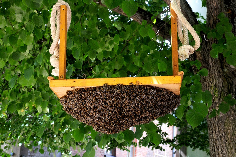 bees swarming on a swing