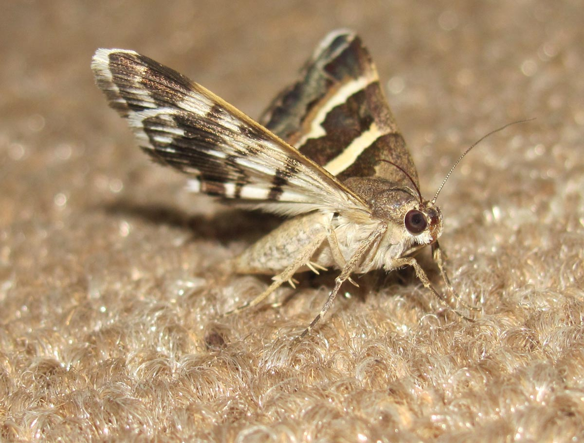 Clothes and Carpet Moth Treatment and Prevention