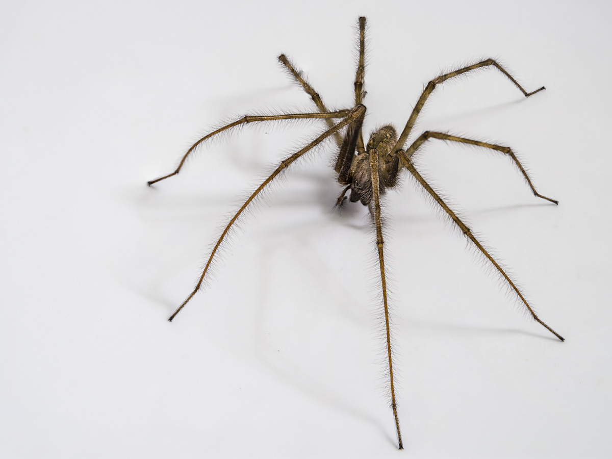 Why Are There So Many Spiders in our Homes in Autumn?